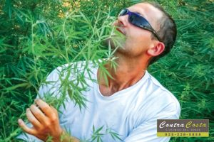So, You Want To Grow Your Own Marijuana At Home?
