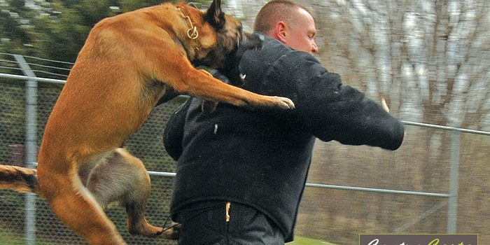 california dog biting laws | Contra Costa Statewide Bail Bonds